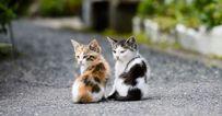 Macskák - képzelet vs. valóság