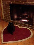 Ezért a macska a legjobb Valentin-napi társ