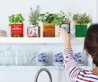 20 tipp: így díszítsd növényekkel a lakást