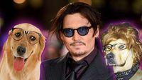 Johnny Depp börtönbe kerülhet a kutyái miatt